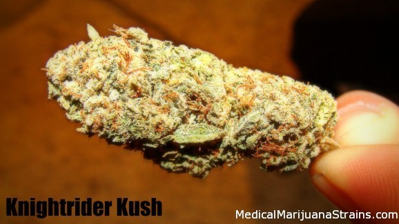 Knightrider kush
